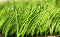 Штучна трава для футбольного поля 40мм моноф. Продаж монтаж